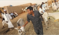 Provision of Reintegration Services to Ex-combatants in Agriculture and Livestock in Khartoum and North Kordofan States.
